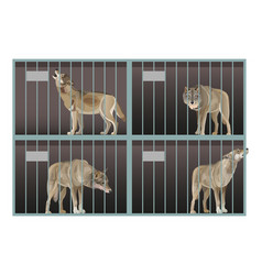 Wild gray wolves in a cage animals in captivity vector