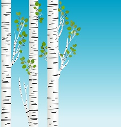 Birch trees with green leaves background vector