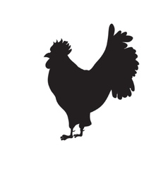 Black Silhouette of rooster on a white background vector image