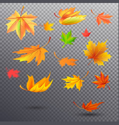 Bright autumn fallen maple leaves vector