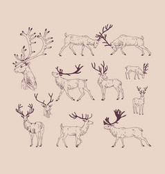 collection of drawings of deer in various poses - vector image