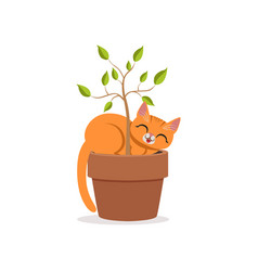 Cute funny red cat sleeping in a flower pot with a vector