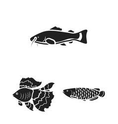 Different types of fish black icons in set vector