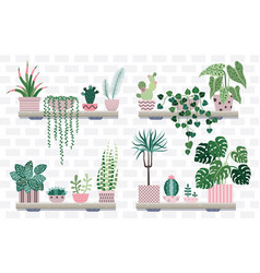 house plant shelves with potted flowers and cacti vector image