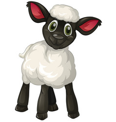 Little lamb on white background vector
