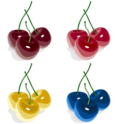 Sweet cherry multicolored isolated on white vector image