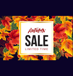 vivid poster with autumn sale promotion vector image