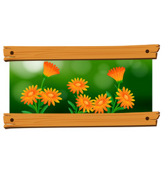 background design with orange flowers vector image