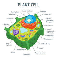 Cartoon plant cell anatomy banner card poster vector