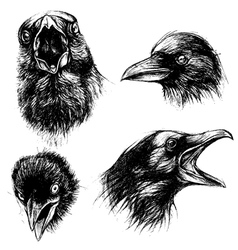 Crow head drawing line work set 01 vector
