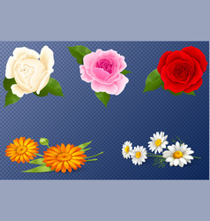Set with a beautiful roses on transparent vector