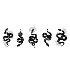 snake set mystical magic objects- moon vector image