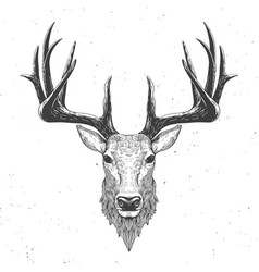 deer head on white vector image