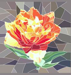 orange tulip vector image