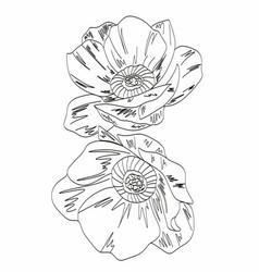 Peony line drawing flower line art peonies vector