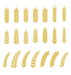 Set of wheat or barley icon vector