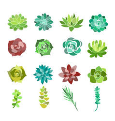 set of green succulent and vector image