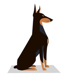 doberman sits on a white background vector image vector image