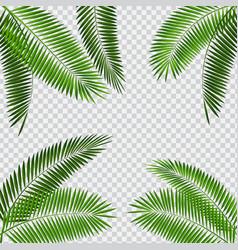 Palm leaf on transparent vector