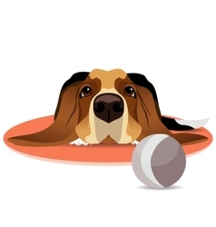 Sad basset hound on circle mat and ball vector image vector image
