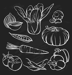 vegetables outline Hand drawn tomato vector image
