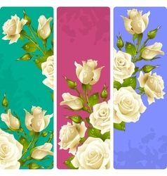 White Rose frames set vector