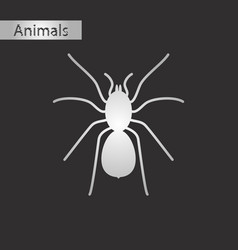 Black and white style icon of tarantula vector