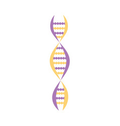 Dna molecule structure or chromosome spiral vector