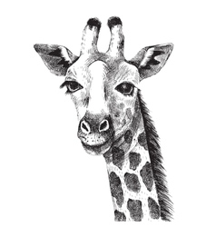 Hand drawn giraffe portrait vector image