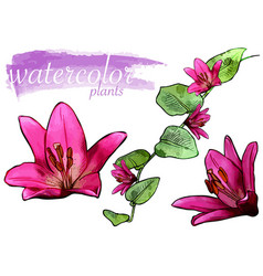 purple watercolor flower set vector image