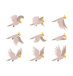 Cartoon cockatoo parrot fly animation frames vector