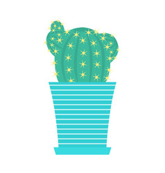 green cacti with flowers in flowerpot vector image