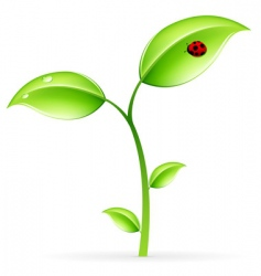 green sprout vector image