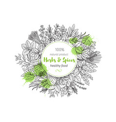 herbs and spice vector image