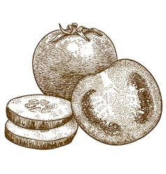 Engraving tomato and cucumber slices vector