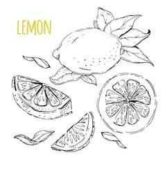 The drawn set of lemons vector image