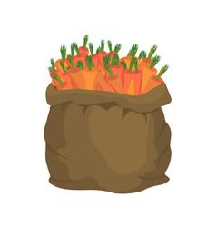 Carrot burlap bag sack of vegetables big crop on vector