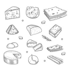 cheese hand drawn milk farm tasty organic healthy vector image