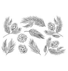 pine cones fir branches pinecones fir tree set vector image
