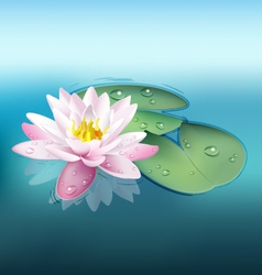 Waterlily vector image