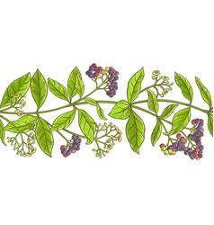 allspice branch pattern vector image