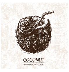 Digital detailed coconut hand drawn vector