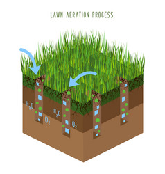 lawn care vector image
