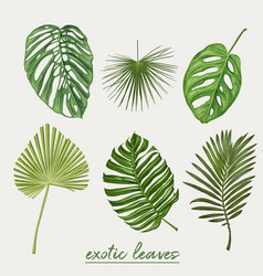 tropical leaves botanical vector image