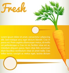 Infographic with fresh carrot vector image