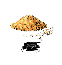 Ginger root powder hand drawn vector