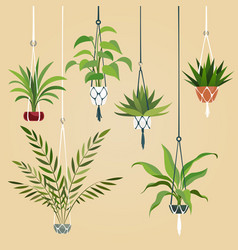 hanging house plant indoor plants with macrame vector image