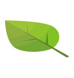 poplar tree leaf icon isometric style vector image
