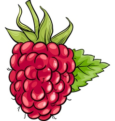 raspberry fruit cartoon vector image