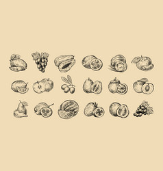 set of fruits fresh food healthy eating sketch vector image